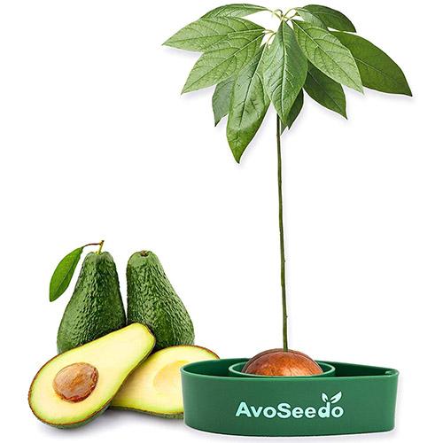 画像: AvoSeedo AvoSeedo ボール – アボガドの木を自分で育てよう