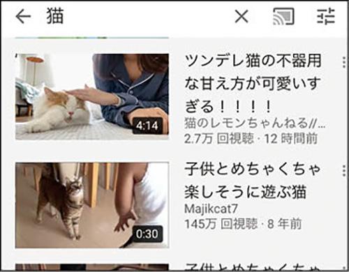 画像: 猫好きにはたまらない、さまざまな猫動画。かわいらしい姿に癒やされる。