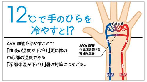 画像: 手足の末端など体の一部のみに存在するAVA血管を冷やすことで、血液の温度を下げ、体の深部体温も調整できる。