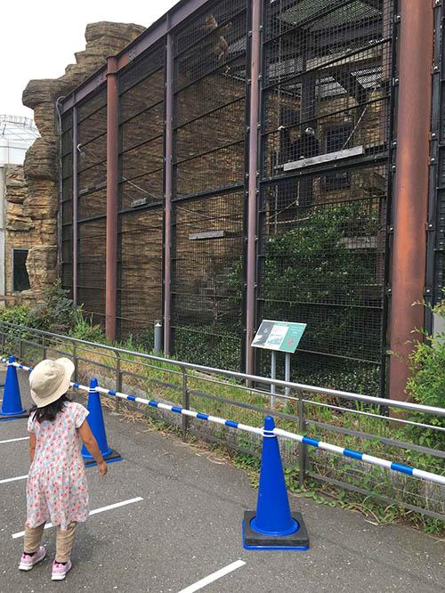 画像: 1メートルごとに引かれた白線と、柵の前に立てられたコーン