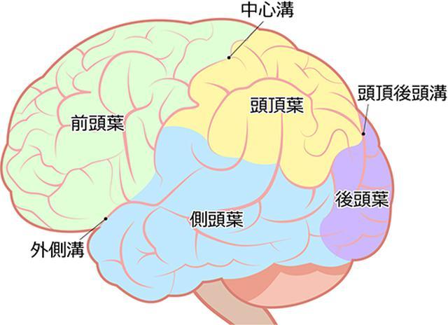 画像: 脳の前頭葉が疲れきって眠れない