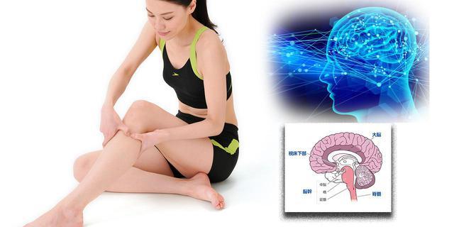 画像: 【鍼灸はなぜ効く?】ツボ治療のエビデンス(科学的論拠)を解説 皮膚への刺激は神経を通って脳に届く - 特選街web