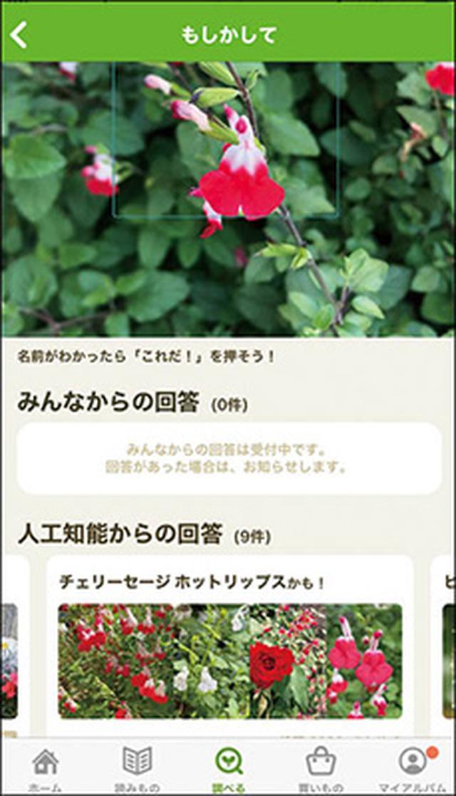 画像2: 花の名前がわかる! 植物がテーマのSNS
