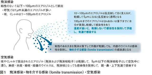 画像: 新型コロナウイルス感染症(COVID-19)のウイルス学的特徴と感染様式の考察より www.jmedj.co.jp