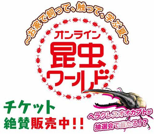 画像: オンラインで学び、実際に育てる飼育セットを販売中 www.ctv.co.jp