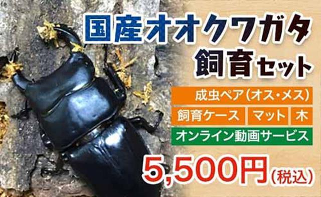 画像: 国産、外国産のクワガタ、カブトが勢揃い www.ctv.co.jp