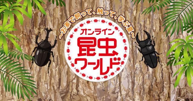 画像: 中京テレビ 昆虫ワールド