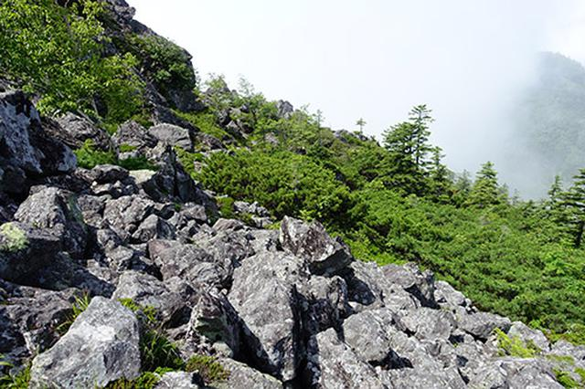 画像: 岩壁や沢が崩壊してさまざまなサイズの岩や石が散乱している斜面であるガレ場、このような岩の隙間でナキウサギが生活しています。