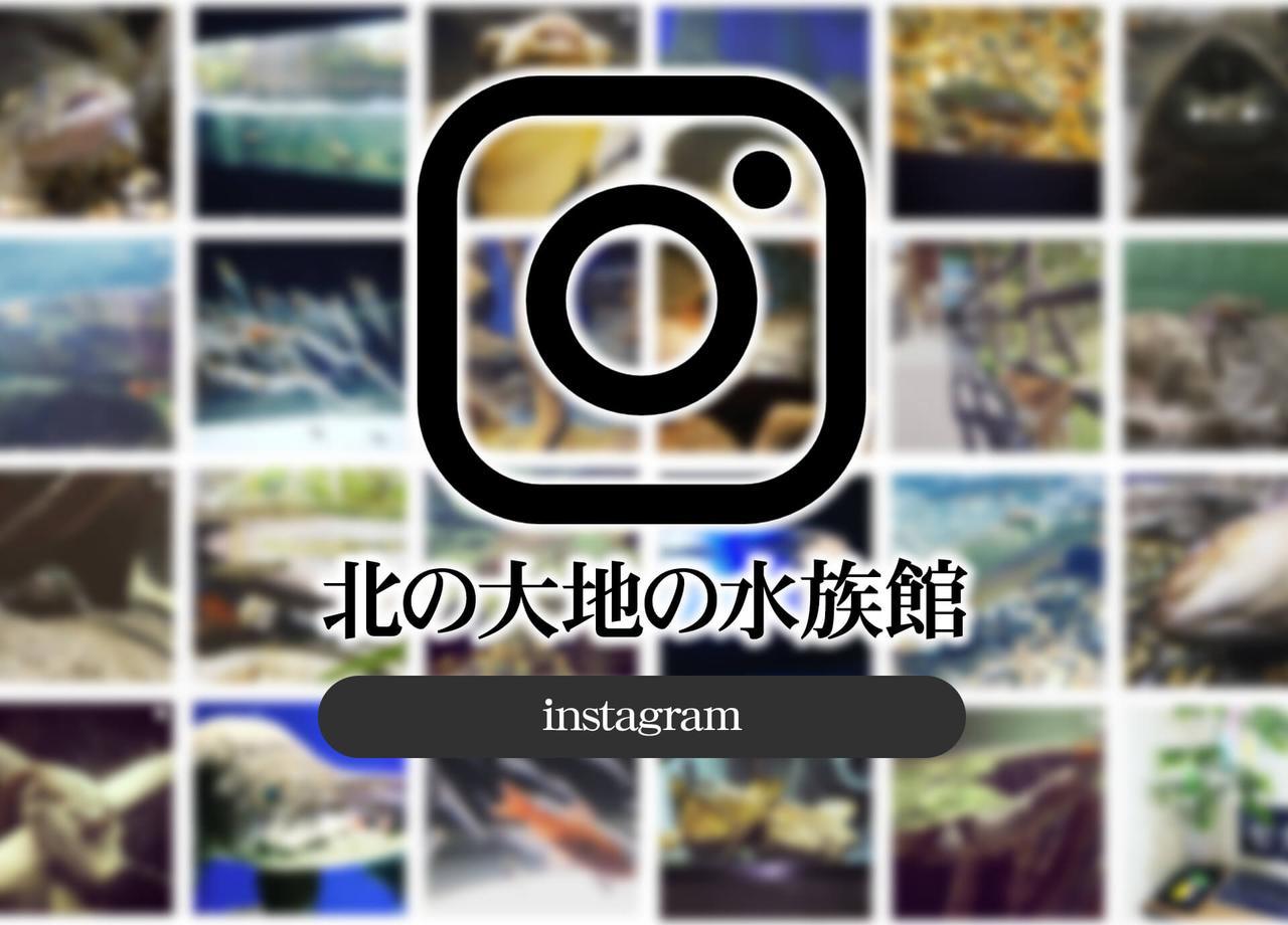 画像: 道の駅「おんねゆ温泉」 | 北の大地の水族館 -山の水族館- | 公式ホームページ