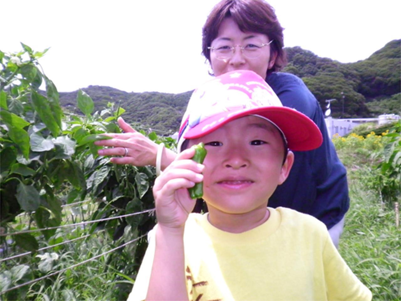 画像: 野菜や花の摘み取り体験が人気 www.kamogawaocean-park.com