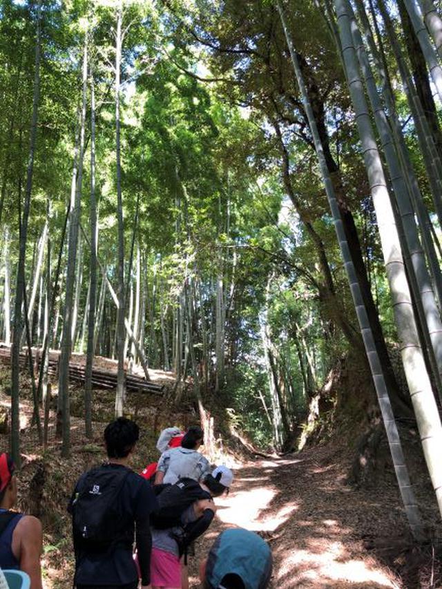 画像: 木の根っこをよけながら林道を駆け巡る。まさに自然の中での大冒険!