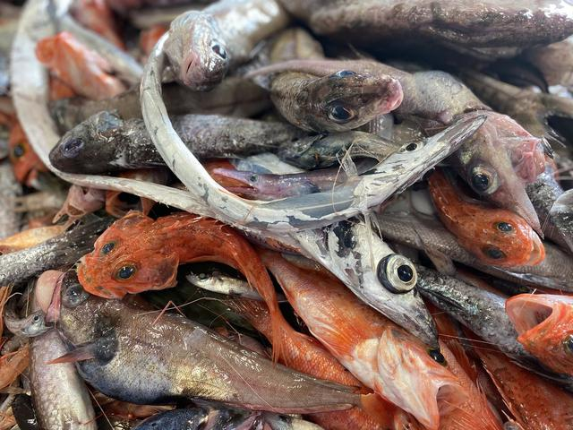 画像: 戸田(へだ)漁港直送!深海魚直送便