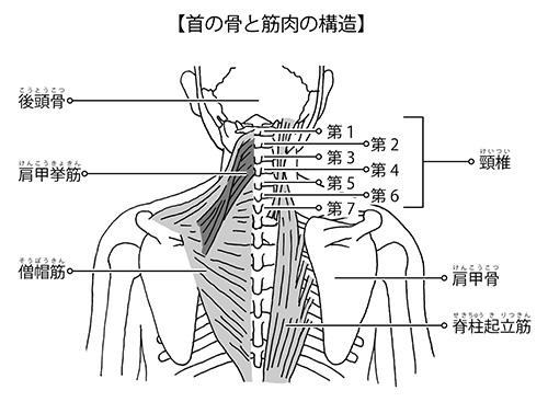 画像: 首の周辺を背面から見た図