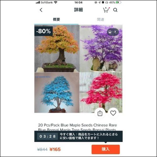 画像: 海外の商品ならではの華やかな盆栽