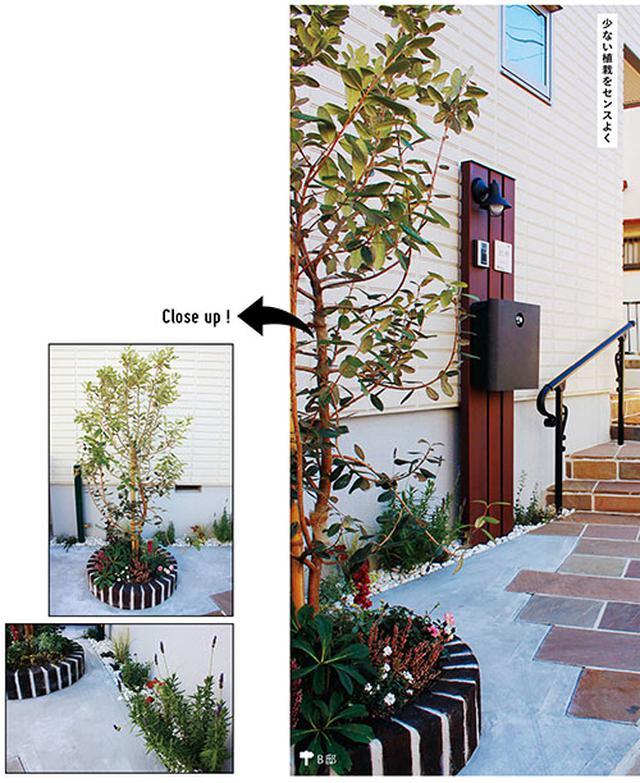 画像: 左上:ちょっと目を引くドーナツ型の花壇にフォーカルポイントとしてフェイジョアを植え、小さな庭に存在感を出しました。足元にも草花を植えて。 左下:建物に沿い20cm幅のスペースにハーブを植えて、コンクリートにやわらかさをプラス。多種類を植えることでリズミカルな印象になりました。