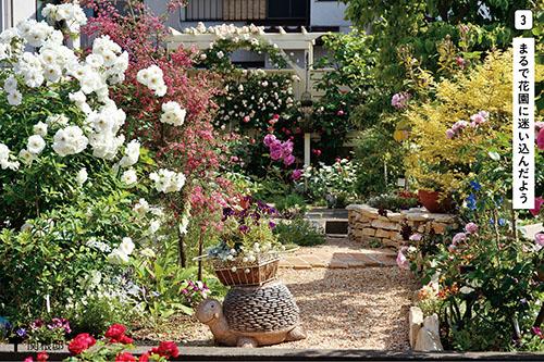 画像3: 花壇やコンテナでセンスのよい草花づかい