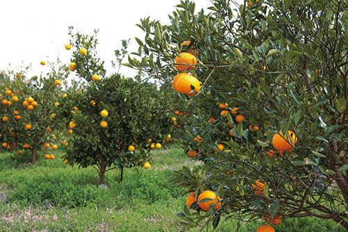画像: 果樹