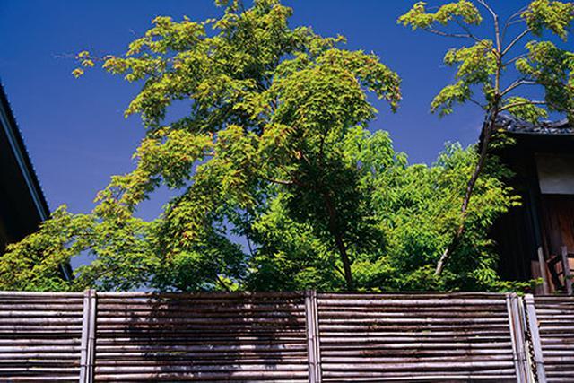 画像: 落葉樹