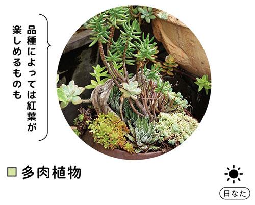 画像: 多肉植物