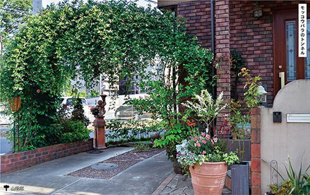 画像: 駐車場の入り口にアーチに見立てたモッコウバラを植えました。モッコウバラは樹形を整えやすいのでおすすめ。花が咲いたときの眺めも意識して仕立てます。