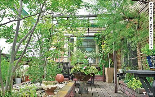 画像: 風に強いシマトネリコ3本が主役。自然光が入り、枝葉から風が抜けて優しい風が吹き込む空間です。ベランダでも工夫次第で緑豊かなスペースに。