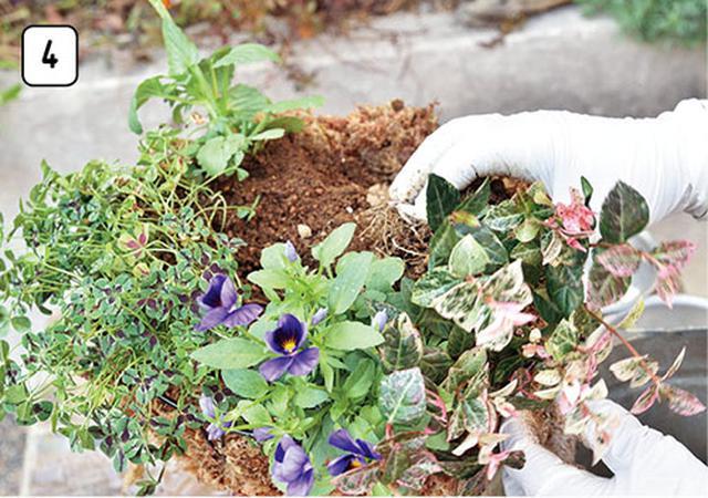 画像5: 水苔を使うなら