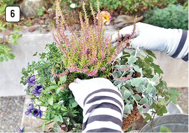 画像8: 水苔を使うなら