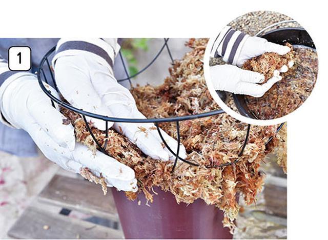 画像2: 水苔を使うなら