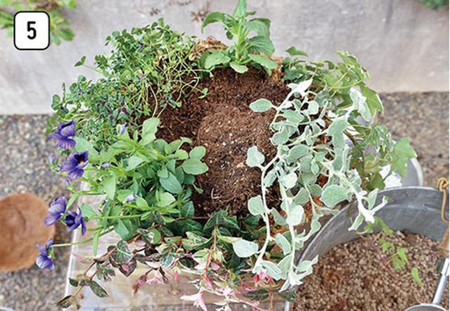 画像7: 水苔を使うなら