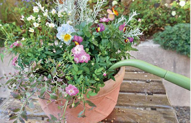 画像: 水やりは時間をかけてゆっくりと。植えたてのときは特に注意して。