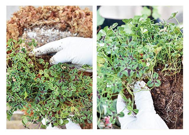 画像6: 水苔を使うなら