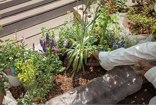 画像2: 草花の配置について