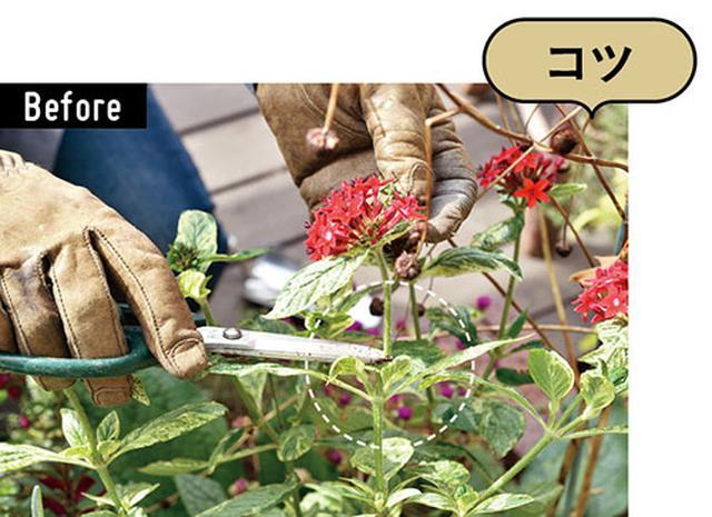 画像: 花がついている茎をカットする