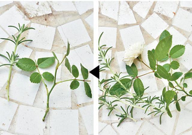 画像: ③花や葉にはさみを入れる