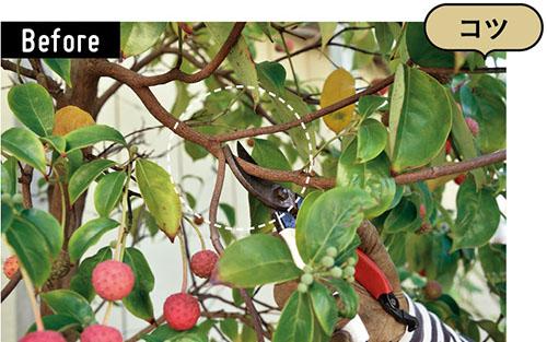 画像: 垂れている枝をカット