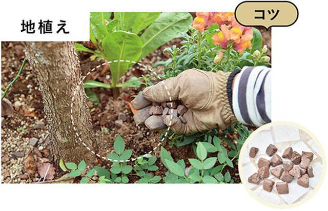 画像: 固形肥料