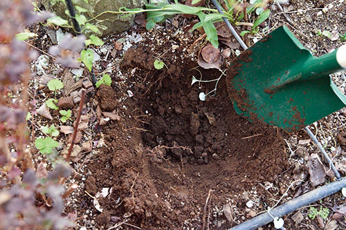 画像: ①苗木より大きく穴を掘る