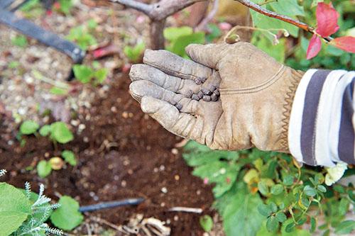 画像: ②肥料を入れる