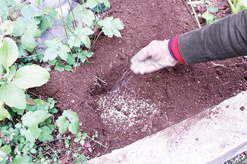 画像1: 土が酸性に偏っているときは「石灰」をまく