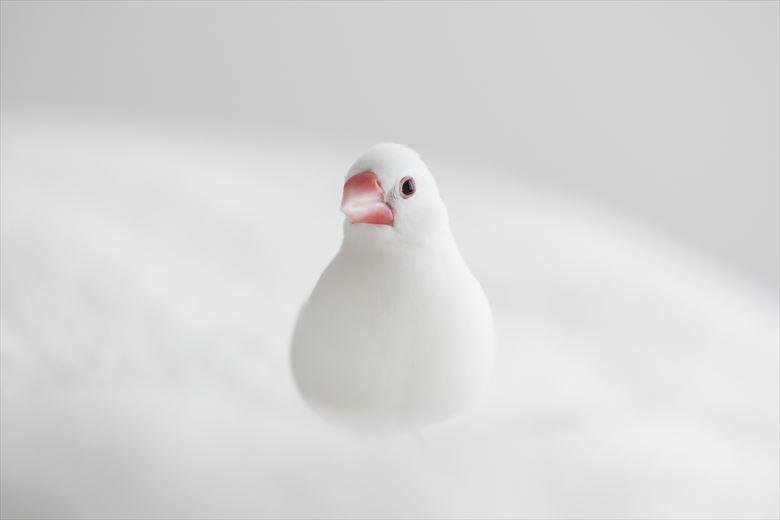 画像: 雪だるまのような真っ白さにうっとり…。 (写真:yuricamera)