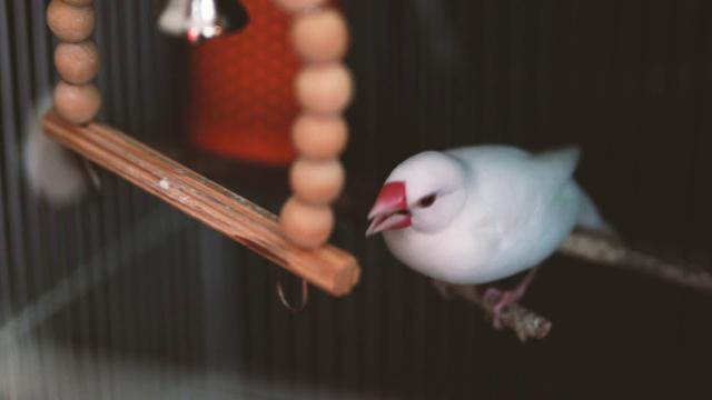 画像: 白文鳥のとある朝 youtu.be