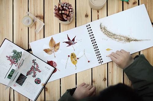 画像: 探検して見つけた葉っぱをスケッチブックに貼り付け。ポケット図鑑で名前を調べます。