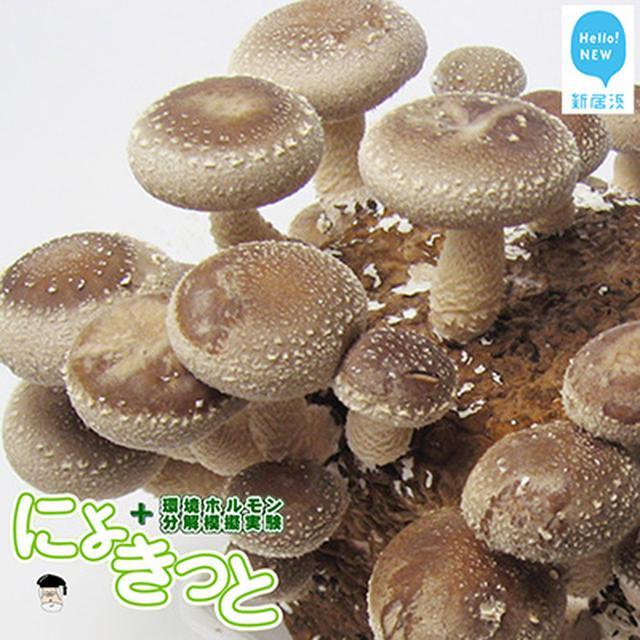 画像: 一石二鳥の実験キット item.rakuten.co.jp