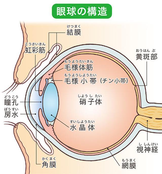 画像: 近視や老眼の原因は?