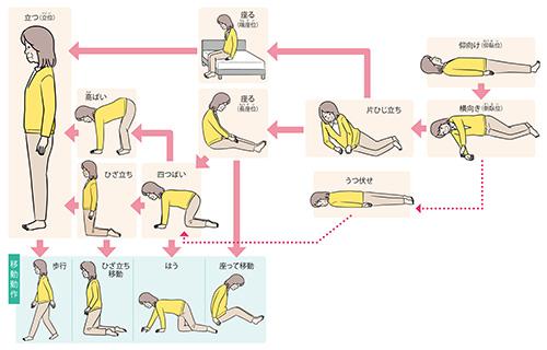 画像: 寝返りから歩行まで 姿勢の種類と動作の 流れチャート
