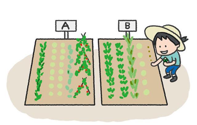 画像: ②市民農園タイプ