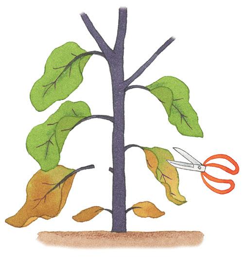 画像: ⑥葉や枝の整理