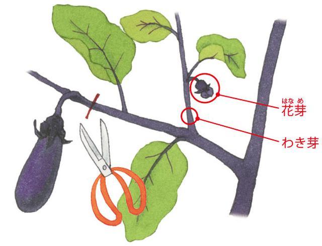 画像: 枝ごと切りとる