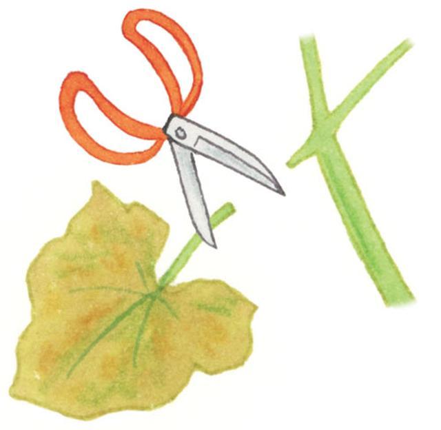 画像: ココが決め手! 病気の葉や枯葉はすぐに切る!