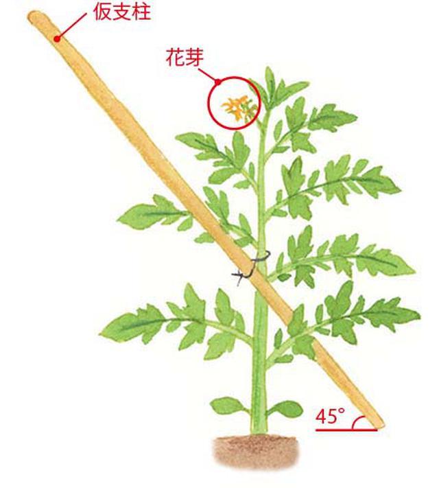 画像: 苗を植えて仮支柱を立てる